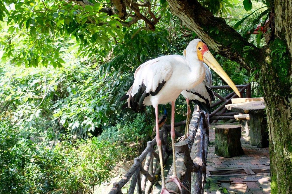 باغ پرندگان (Bird Park) کوالالامپور مالزی
