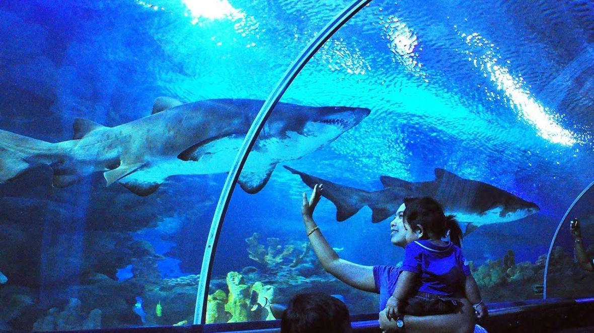 تفریحات و امکانات آکواریوم کوالالامپور (Aquaria KLCC)