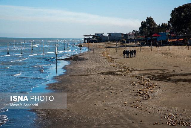 مناطق ویژه علم و فناوری دریایی در استان های ساحلی کشور ایجاد می گردد