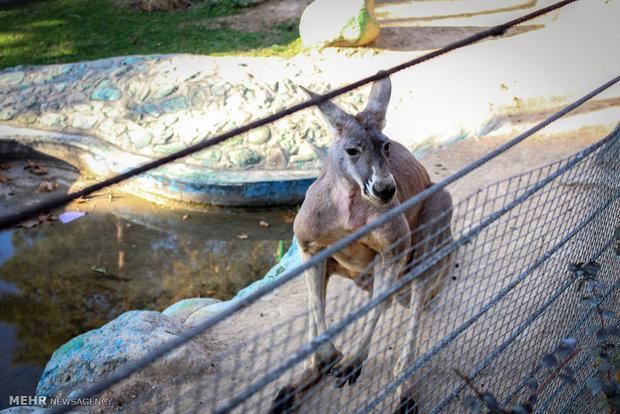 استقرار دامپزشک در باغ وحش مشهد برای رسیدگی به حیوانات