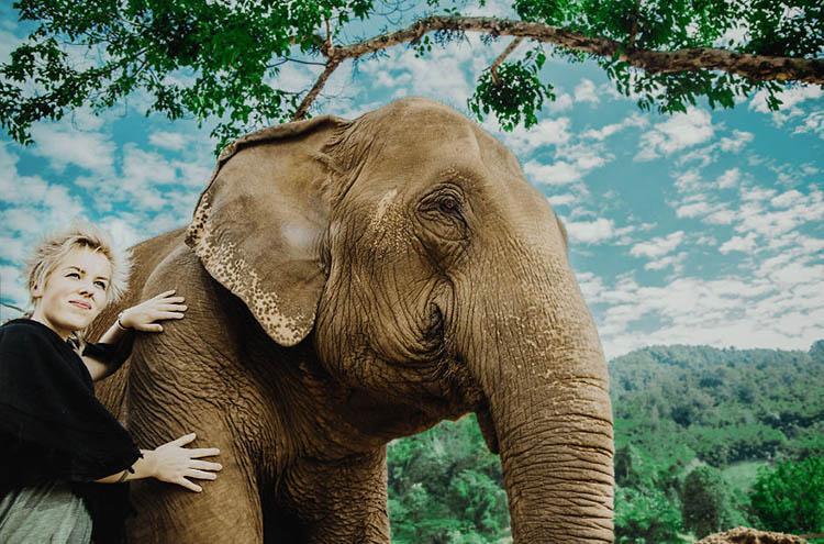 فیل های چیانگ مای