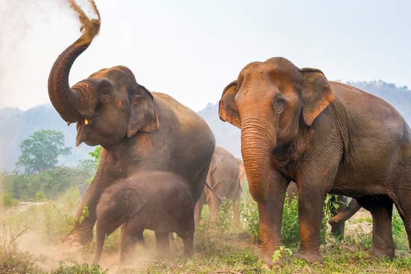 فیل سواری، تفریحی به بهای شکنجه حیوان
