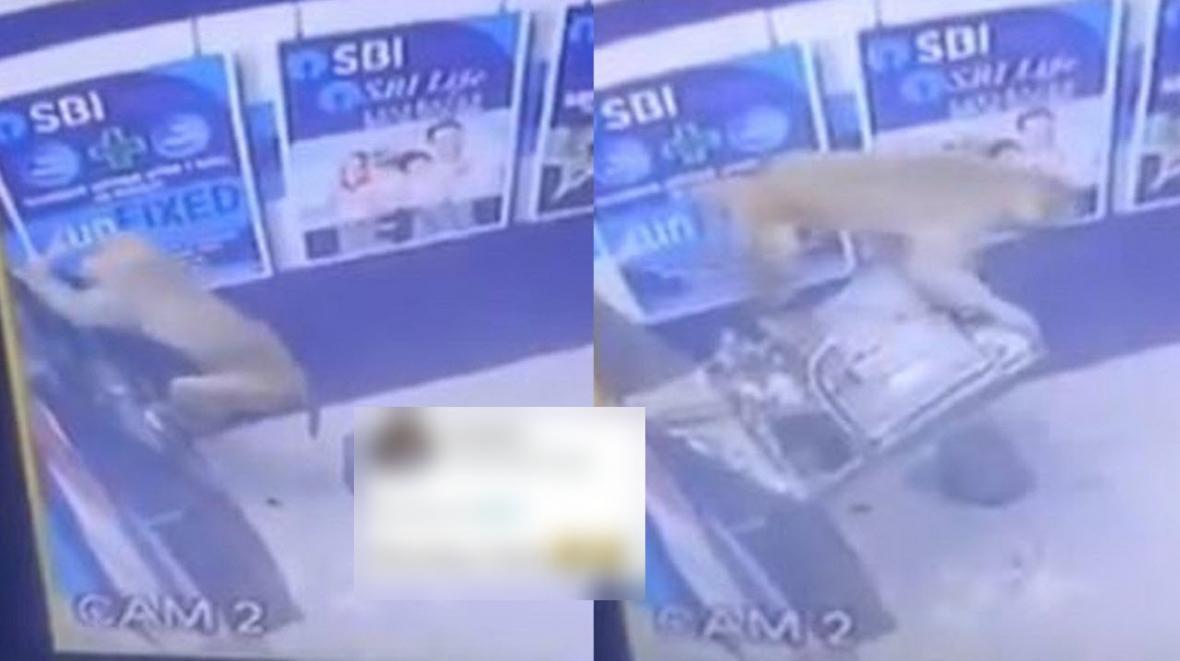 تلاش عجیب میمون برای سرقت از خودپرداز بانک!