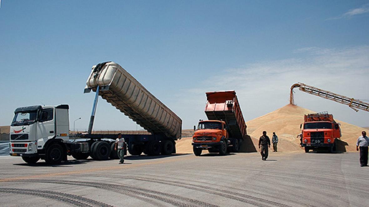 تولید 120 تن گندم در مهدی شهر پیش بینی می شود
