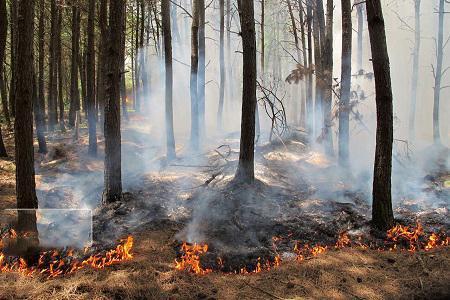 پنج درصد آتش سوزی های اراضی ملی عمدی است