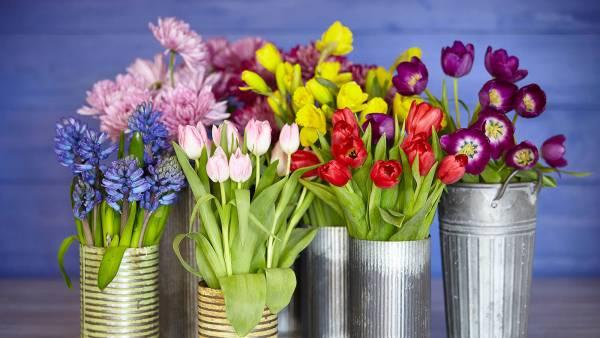 روش کاشت و نگهداری گل لاله در منزل