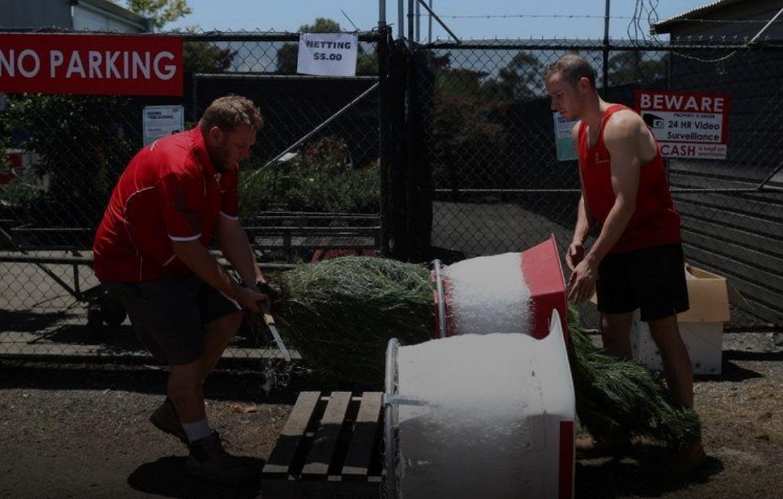 مزارع پرورش درخت کریسمس در استرالیا: اتمام موجودی!، برای 2021 رزرو کنید
