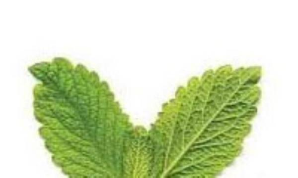 هفت ماسک و لوسیون گیاهی برای یک هفته شما