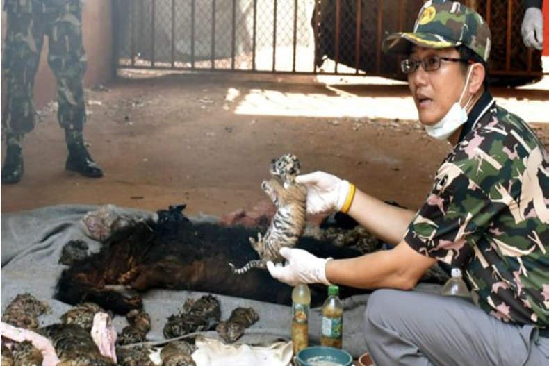 رسوایی معبد ببرها در تایلند