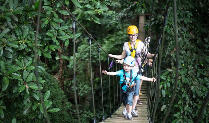 جنگل گیبون تایلند